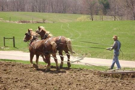 Horse and Harrow
